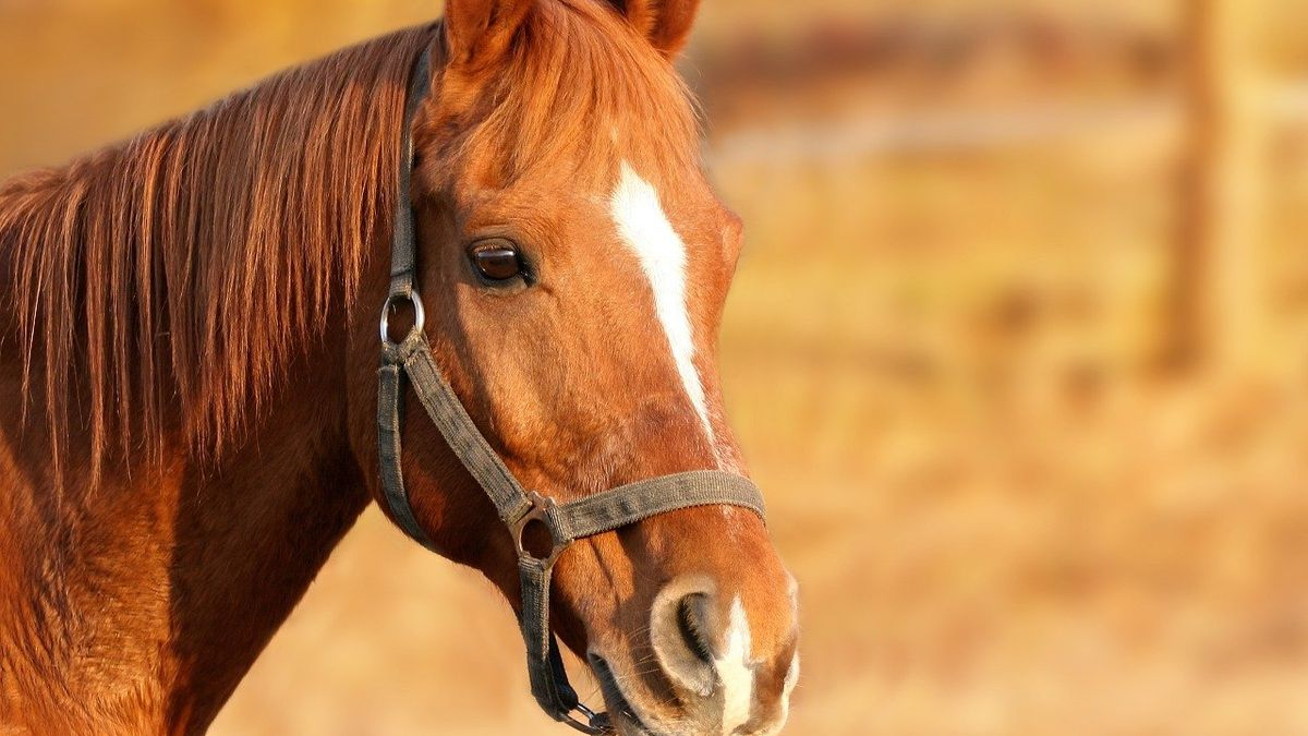 Man turns former golf course into horse ranch