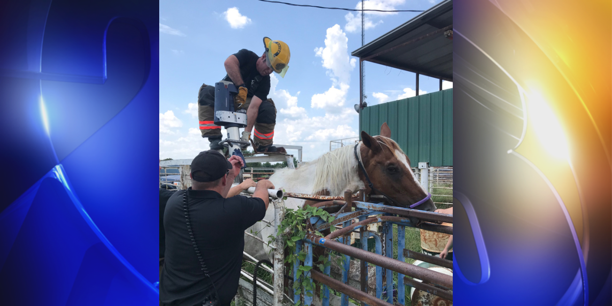 Muskogee firefighters rescue trapped horse