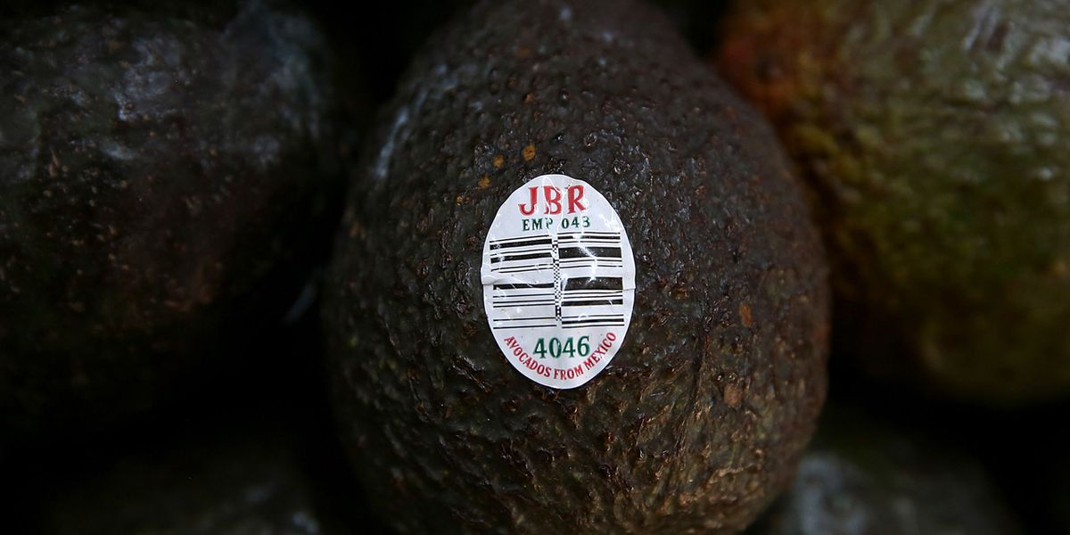 Avocados could be in short supply, disappear in U.S. if Trump shuts border with Mexico
