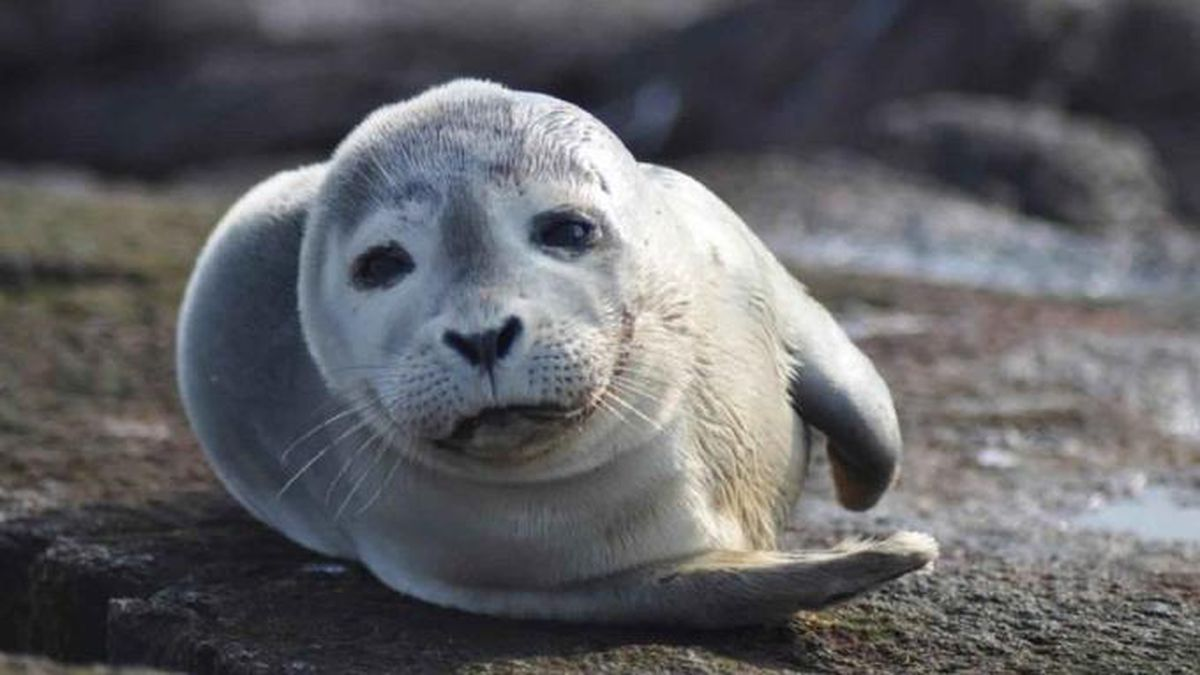 Don't touch seal pups, officials say after man brings one to hotel room