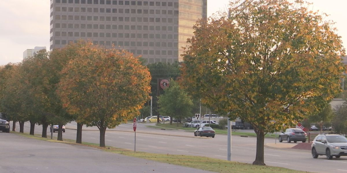 Local beetle invasion expected to kill hundreds of thousands of Tulsa County trees